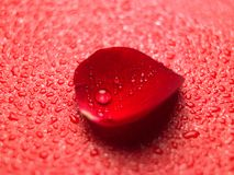 Single rose petal Royalty Free Stock Images