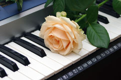 Single rose on a piano. Keyboard Royalty Free Stock Photos