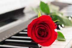 Red rose piano keys romantic background. stock images