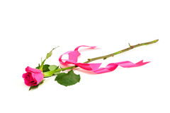 Single rose with pink ribbon Royalty Free Stock Images