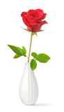 Single rose in a vase Royalty Free Stock Photos