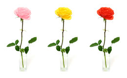 Single rose in vase - color options Royalty Free Stock Photo