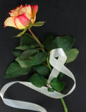 Single rose vertically with ribbon Stock Image