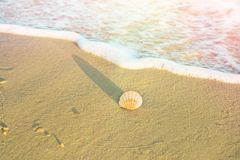 Single Round White Striped Sea Shell on Beach Sand. Foamy Wave Blue Turquoise Water. Golden Sunlight Soft Pastel Colors. Summer. Vacation Traveling Wanderlust Royalty Free Stock Photography