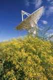 Single Satellite Dish. Solitary satellite dish with yellow wildflowers in foreground, Socorro, New Mexico Stock Photos