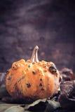 Single scary pumpkin Stock Image