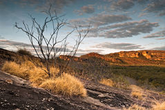Single scorched tree at Nourlangie badlands in Kakadu National Park. A single sun-scorched tree at dusk int Nourlangie badlands, Kakadu National Park Royalty Free Stock Photos