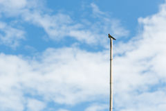 Single sea bird standing on bamboo pole Royalty Free Stock Photos