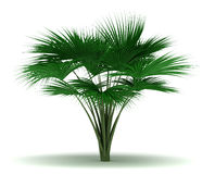 Single Sea Coconut Tree Royalty Free Stock Images