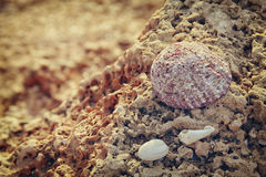 single sea shell on rock at the beach Royalty Free Stock Images