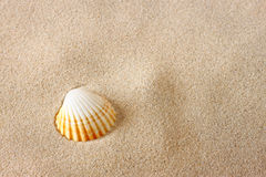 Single sea shell on sand at the beach Royalty Free Stock Photos