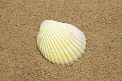 Single sea shell on sandy beach Royalty Free Stock Photography