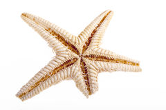 Single sea star isolated on white background Royalty Free Stock Images