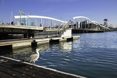 Single seagull near Rambla de Mar bridge in Barcelona port Stock Image