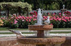 Single seagull in the park stock images