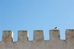 Single seagull standing on old wall in crown shape in day light Stock Image