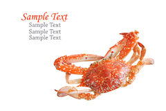 Single sear orange crab. Stock Photo