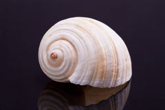 Single seashell isolated on black background Stock Photo