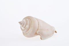 Single seashell isolated on white background macro Royalty Free Stock Photos