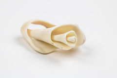 Single Seashell Isolated on White royalty free stock photos