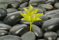 Single seedling growing out from rocks Stock Images
