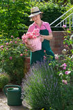 Single senior working in her garden. Stock Photography