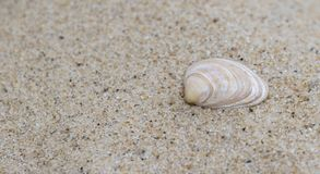 A single shell in the sand. On Bournemouth Beach, Dorset, UK Stock Photography