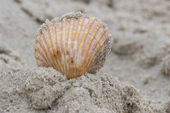 A single shell on the sand Royalty Free Stock Photography