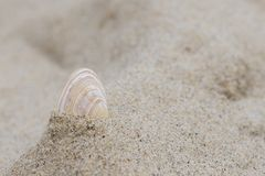A single shell in the sand Stock Photography