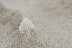 A single shell in the sand Stock Images