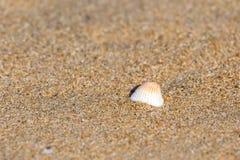 Single shell on the Thiruvalluvar Nagar Beach, Chennai stock image