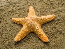 Single shellfish on a sand. Stock Images