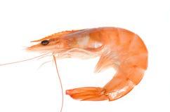 Single shrimp Royalty Free Stock Photography