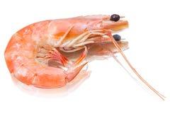 Single shrimp Royalty Free Stock Image