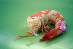 Single shrimp close up on green plate. Red shrimp on plate ready for meal Royalty Free Stock Photography