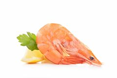 Single shrimp isolated Royalty Free Stock Photography