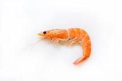 Single shrimp, photo Stock Images