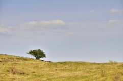 Single tree on meadow under blue sky with clouds Stock Photos