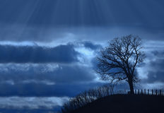 Single silhouette tree. Scary single silhouette tree with stormy blue background of clouds and rays Stock Photography