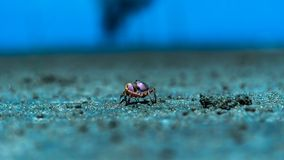 A single small crab walk at beach stock photography