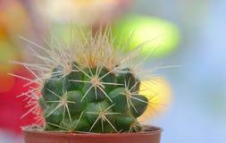 Single small decorative cactus Stock Photo
