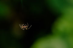 Single Small spider falling mid-air Stock Images