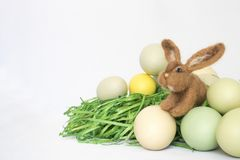 Felted Bunny Sits Among Colored Eggs on Grass with White Backgro. Single small wool felted brown bunny rabbit with pale colored eggs and green grass on white Stock Image