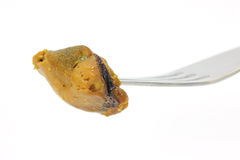 Single smoked mussel on fork Royalty Free Stock Images