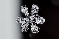 Single Snowflake. With a white and black background Stock Image