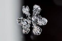 Single Snowflake Stock Image