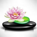 Single spa stone/pebble with lotus flower Royalty Free Stock Photography
