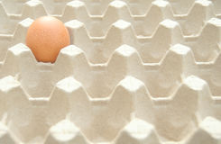 Single speckled egg in a cardboard carton Stock Image