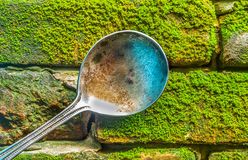The single spoon on moss background. Royalty Free Stock Photo