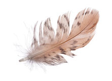 Single spotted brown feather on white Royalty Free Stock Images